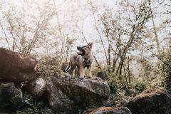 Buitenshoot-dierenfotografie-hondenfotografie-ravenandthecats1